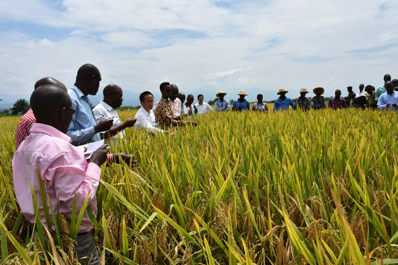 稻田的守护者们——中国援布隆迪