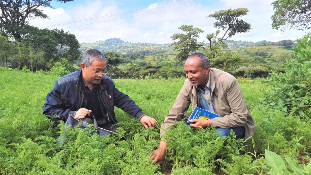 守护餐桌上的绿色――中国农业专家助力埃塞俄比亚蔬菜种植发展